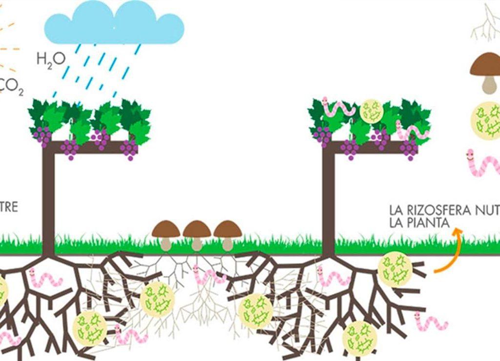 sostenibilita-batzella-5